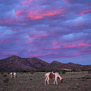 Horses With New Mexico Sunset Poster
