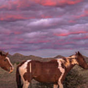 Horses With Southwest Sunset Poster