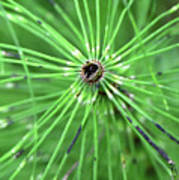 Horsetail Reed 1 Poster
