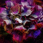 Colorful Hortensia Closeup Poster