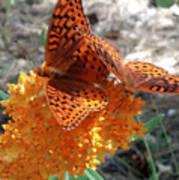 Horton Butterflies Poster