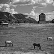 Horses Grazing At Mancos Grain Elevator Poster