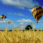 Hot Air Balloons Over A Wheat Field Poster