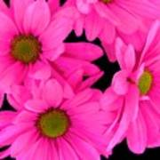 Hot Pink Flowers Poster