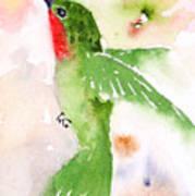 Hovering Anna's Hummingbird Poster