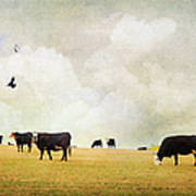 How Now Black Cow Poster