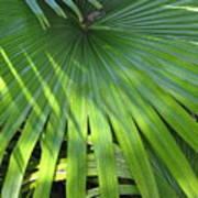 Huge Palm Leaf Poster