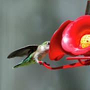 Humming Bird 6 Poster