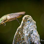 Humming Bird Hovering Over Water Fountain Getting A Drink Poster