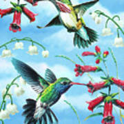 Humming Birds Poster by JQ Licensing