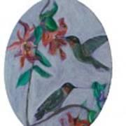 Humming Birds Poster