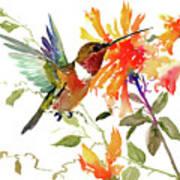 Hummingbird And Orange Flowers Poster
