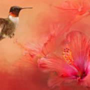 Hummingbird And Peach Hibiscus Poster