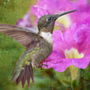 Hummingbird And Petunias Poster by Bonnie Barry