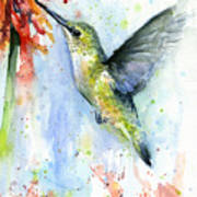 Hummingbird And Red Flower Watercolor Poster
