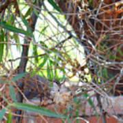 Hummingbird Babies Poster