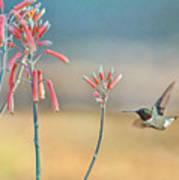 Hummingbird Beak On Horizon Poster