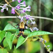 Hummingbird Bee Poster