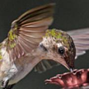 Hummingbird. Poster