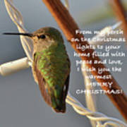 Hummingbird Christmas Card Poster