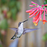 Hummingbird Happiness 2 Poster