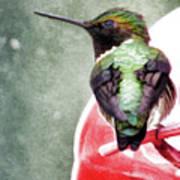 Hummingbird Poster