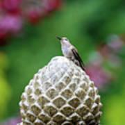 Hummingbird On Garden Water Fountain Poster