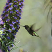 Hummingbird Sharing Poster