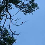 Hummingbird Silhouette Poster