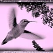 Hummingbird With Old-fashioned Frame 2  Poster