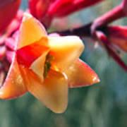 Hummingbird Yucca Poster