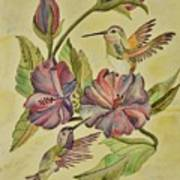 Hummingbirds And Hibiscus Poster