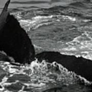 Humpback Whale Fluke 3 Poster