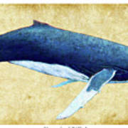 Humpback Whale Painting - Framed Poster