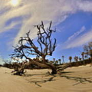 Hunting Island Beach And Driftwood Poster
