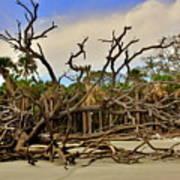 Hunting Island Driftwood Beach Beaufort Sc Poster