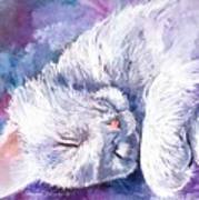 Hushabye Kitten Poster