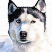 Husky Blue Poster