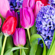 Hyacinth And  Tulip Flowers Poster