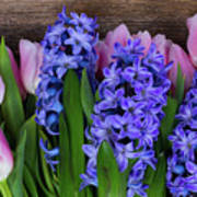 Hyacinths And Tulips II Poster
