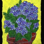Hydrangea In A Pot Poster