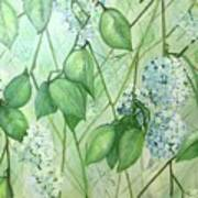 Hydrangea In Green Poster