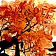 Hydrangea Macro In Autumn Poster