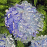Hydrangea Time Poster