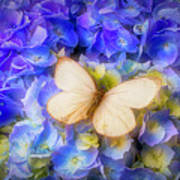 Hydrangea With White Butterfly Poster