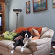 I Am Not A Couch Potato. I Am A Couch Dog Poster