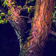 I Am Tree Poster
