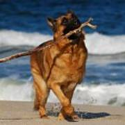 I Got It - German Shepherd Dog Poster