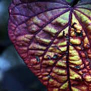 I Leaf You Poster