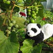 I Love Grapes Says The Panda Poster